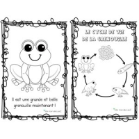 Cahier sur la grenouille