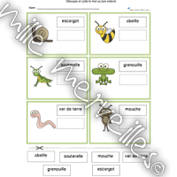 Activité mots insectes