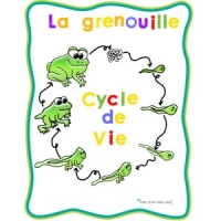 Collection grenouilles